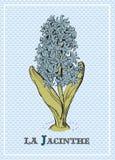 与美丽的风信花的浪漫卡片 免版税图库摄影