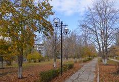 与美丽的黄色叶子的桦树在风 免版税库存照片