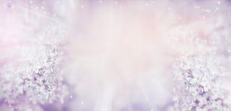 与美丽的轻的淡色淡紫色花的花卉自然背景 免版税库存照片