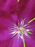 与美丽的紫色花的爬行物 库存图片