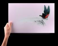 与美丽的蝴蝶的启发概念 库存照片