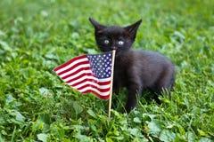 与美国旗子的小猫 免版税库存照片