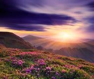 美好的日落在春天在山的 库存图片