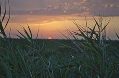 与美好的日落的轻的夏天 免版税库存照片