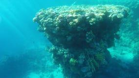 与美好的珊瑚的礁石无危险浇灌 股票录像