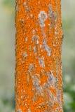 与美好的纹理的树 免版税库存照片