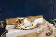 与美好的配色白色和棕色睡眠的野生猫在德波拍的路照片的边印度尼西亚 免版税库存照片
