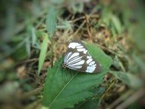 与美好的颜色的蝴蝶动物 免版税库存照片