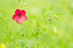 与美好的bokeh的红色花 库存图片