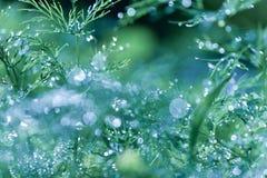 与美好的bokeh,在草的露水的抽象defocused,被弄脏的自然花卉绿色背景 库存图片