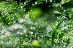 与美好的bokeh,在草的露水的抽象defocused,被弄脏的自然花卉绿色背景 免版税图库摄影