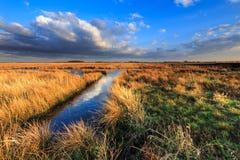 与美好的cloudscape的草甸风景 免版税库存照片