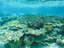 与美妙和美好的珊瑚和热带鱼的水下的看法在马尔代夫 库存照片