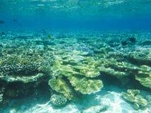 与美妙和美好的珊瑚和热带鱼的水下的看法在马尔代夫 免版税库存照片