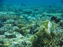 与美妙和美好的珊瑚和热带鱼的水下的看法在马尔代夫 免版税库存图片