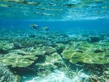 与美妙和美好的珊瑚和热带鱼的水下的看法在马尔代夫 库存图片