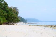 与美洲红树树的原始和平静的白色沙滩与天蓝色的海水和清楚的天空- Kalapathar, Havelock,安达曼 免版税图库摄影