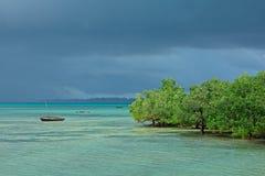 与美洲红树树的海景 免版税库存图片