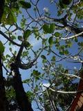 与羽毛花的好天气 库存照片