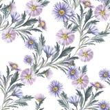 与翠菊的无缝的样式 手凹道水彩例证 库存例证
