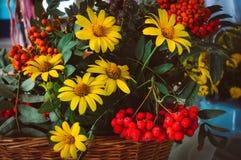 与翠菊花的秋天花束和烘干叶子 图库摄影