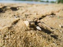 与翼的单独蚂蚁在黄沙特写镜头 免版税库存照片