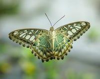 与翼的蝴蝶在玻璃门打开 免版税库存图片