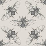 与翼葡萄酒无缝的样式的甲虫 图库摄影