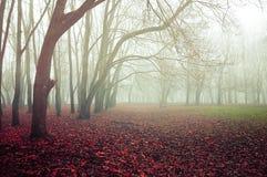 与老光秃的秋天树和下落的红色秋叶的秋天有雾的森林风景在地面上 库存图片