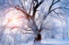 与老冷淡的冬天树的冬天风景在阳光下 图库摄影