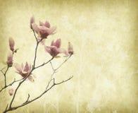 与老古色古香的葡萄酒纸的木兰花 免版税图库摄影