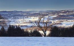 与老扭转的树的风景冬天风景 库存照片