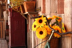 与老木地板的向日葵篮子 库存图片