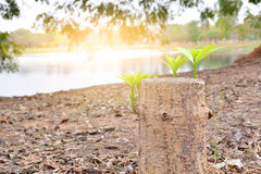 与老树桩, beauti的年轻绿色叶子和分支成长 免版税库存照片
