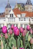 与老欧洲大厦的许多美丽的桃红色郁金香作为背景 库存照片