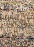 与老油漆小块片断遗骸的老木背景在木头的 一棵老树的纹理,与油漆的板 免版税库存照片