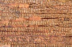 与老油漆小块片断遗骸的老木背景在木头的 一棵老树的纹理,与油漆的板 免版税库存图片