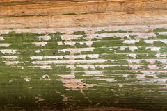 与老油漆小块片断遗骸的老木背景在木头的 一棵老树的纹理,与油漆的板 免版税图库摄影