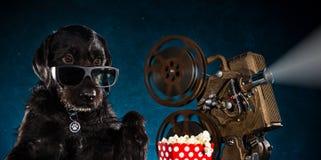 与老牌放映机的黑滑稽的狗 免版税库存照片