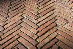 与老砖的地板-锡耶纳意大利 库存照片