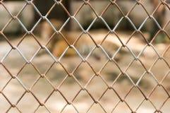 与老虎的笼子在动物园里 免版税库存照片