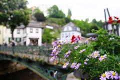 与老铜桥梁的紫罗兰色延命菊花 库存图片