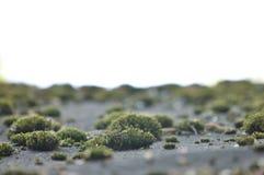 与老青苔,地衣的风景 与灰色肮脏的青苔,草,生长在地面上的地衣的自然本底 桌面的图象 免版税库存图片