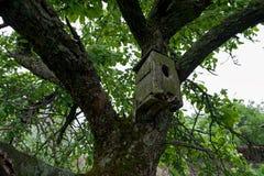 与老鸟舍的森林视图在树 免版税库存照片