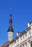 与老Tomas的城镇厅尖顶在上面在塔林,爱沙尼亚 免版税图库摄影