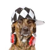 与耳机的狗 背景查出的白色 免版税库存图片