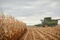 与联合收割机的被收获的玉米领域 图库摄影
