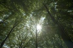 与背后照明太阳的树 免版税库存照片