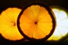 与背后照明的柑橘段 免版税图库摄影