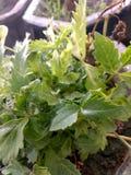 与背景庭院的逗人喜爱的白色小花 免版税库存图片